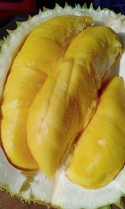 榴莲王鲜黄的