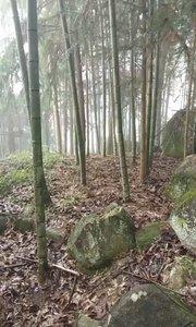 竹子有公竹和母竹之分