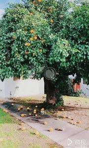看到没有,家里的果树结果了