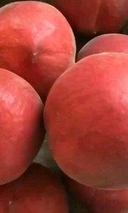 """没有滤镜,没有特效?泉城妈妈""""玫瑰香甜""""蜜桃玫瑰本色,我们用两年的时间摸索出的最佳发货成熟度,用户收到1~2天食用口感最佳,并非是熟过的桃子?"""