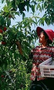 """""""泉城妈妈""""精选每一颗桃子,我们相信""""粮者良心,心到味道""""??"""