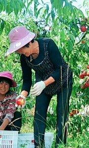 """把产品当宝贝,""""泉城妈妈""""为用户精选每一颗好桃子?"""