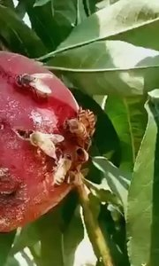 贪吃的小蜜蜂?