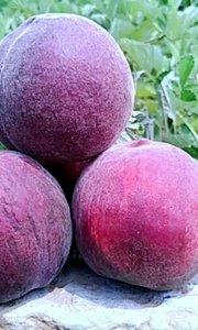 """人们都说""""仙桃""""、""""寿桃"""",吃桃子真的能长寿吗??"""