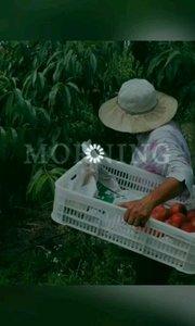摘桃喽,来基地管吃够?
