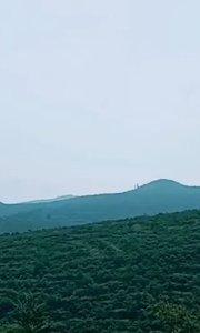 """迷雾笼罩下的""""泉城妈妈""""蜜桃园,站在山顶,好似腾云驾雾?"""
