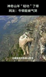 在悬崖峭壁上的山羊