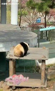完了呀,这年头,做个女模都马叉虫不过一只熊猫了,凭实力拉的。