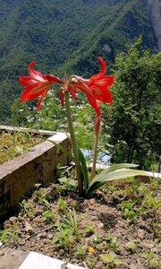 鲜花爆满山