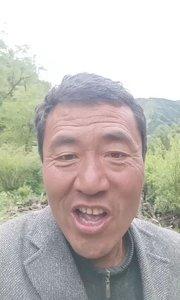 可爱的一朵玫瑰花新 疆民歌刘冰唱。