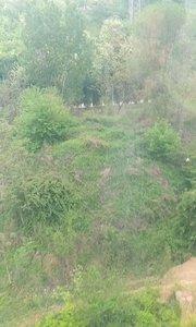 2019年4月21日到嵩山少林寺三皇寨景区旅游,在高空缆车上见到的风景,留作纪念。
