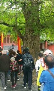 2019年4月出游嵩山少林寺,实录五。