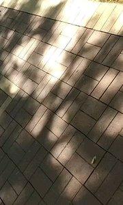 2018年9月26 日,拍摄于甘肃兰州安宁区,晌午,静谧的校园,树林中鸟?叫几声……