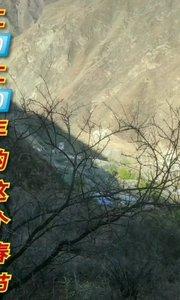 2⃣0⃣2⃣0⃣年的春节同感吗!#亿哥 创作#挑战100天不刮胡子 #我只好躲在大山里