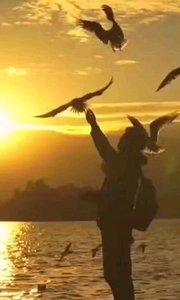 黃昏時刻 海鷗相伴