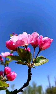 春天來啦 安排(?????)