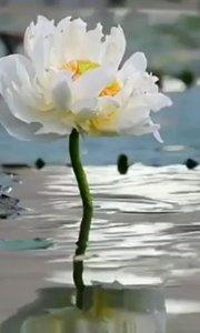 最浪漫的力量,是不离不弃;最温柔的力量,是一心一意;最强大的力量,是无怨无悔;最快乐的力量,是一生一世。最幸福的感受,是