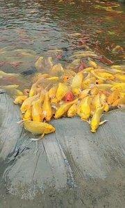 喜欢的鱼的关注关注
