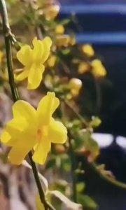 2020 03.16☀️早安?????    ?????           ↳ ³⁶⁵ ☞天陪你  ☞早安   ✩┆ᑋᵉᑊᑊᵒᵕ̈ 我渴望的幸福,平淡中带着安详,就像冬日的暖阳,从天而降并余味悠长。