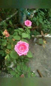 看着这些亲手种的花,心情么么哒的。一个很喜欢花的男人,有没有人愿意交朋友的?
