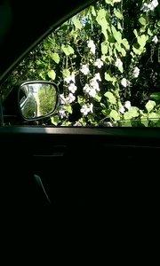 每天从这里过,今天终于忍不住停下来观赏观赏这些美丽的花,真的太美了,美丽的花令人心旷神怡,万能的朋友圈谁知道这是什么花?
