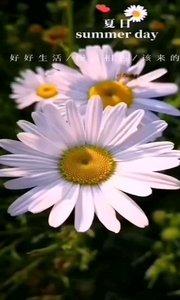人生看似简单, 却承载着太多的情非得已, 生活看似容易,却让你身不由己。