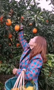 #错过我就是错过全世界 乡下的绿色食品,现在丰收的季节,好喜欢这种忙的不亦乐乎的感觉!橙心橙意,相信大家吃了也会像橙子一样橙功!#hello我是这样的解解
