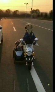 牛逼二狗??撞车了???