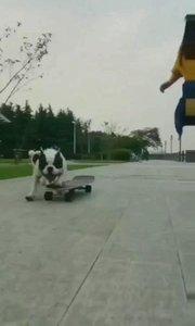 牛逼哄哄的狗??撞车了