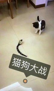 蛇赢了,猫怕了。