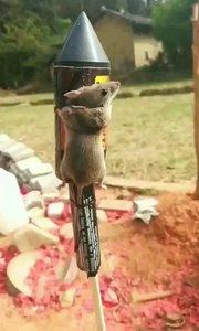 老鼠上天??