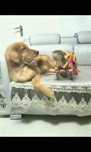 猴挑战狗?