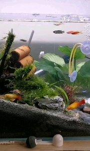 漂亮么!热带鱼,喜欢养鱼的朋友可以一起探讨。