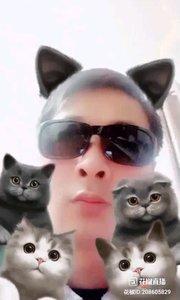 帅哥美女大家好,过来看五只小猫咪