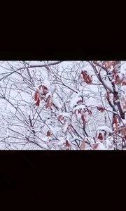 厚贤教育盖世金口商学院领袖毅行-冬毅 三寺穿越 圆满平安成功穿越完美世界[太阳]精彩演绎[强]平凡的世界不平凡的人[强][强]这就是领袖毅行精神