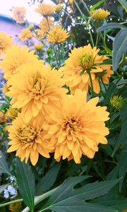 #脑洞大开的日常 我家小花园繁花似锦,一起来参观吧