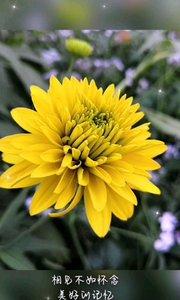 #脑洞大开的日常 我的拍摄技术还是不错,主要我家小花园太美