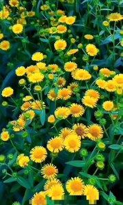 #我的夏日出游记 #户外进行时 野生的雏菊美吗?