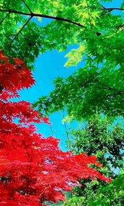 :  ?一个转身夏天就变成了故事,一次回眸秋天变成了风景。愿这个夏天的遗憾,都是秋天惊喜的铺垫……❤️