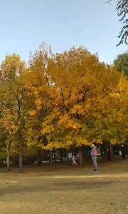 北京海淀公园#又嗨又野在玩乐