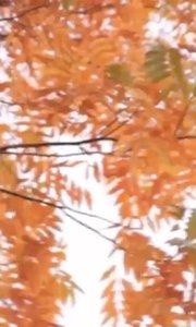 #秋天ootd #花椒星闻 #秋天校园 一念花开,一念花落;一念放下,万般自在。———这个视频看起来有点悲伤@花椒热点