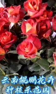 待到#拿本颜值做你的壁纸 春暖花开时