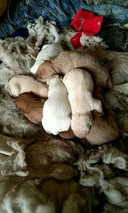 #又嗨又野在玩乐 大黄的九个宝宝
