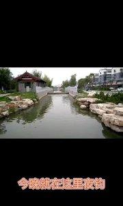 我家门口的【嘀~】河,里面小鲫鱼很多,今天就玩小鲫鱼了。#野钓 #夜钓