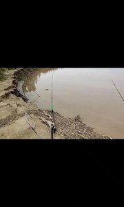 真正的黄河,一个大的回水湾,坝头。运气好会有黄河大鲤鱼。#又嗨又野在玩乐