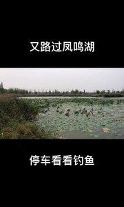 有来过凤鸣湖钓鱼的鱼友吗?据说是一人一杆,需要钓鱼证,管控很严厉。#又嗨又野在玩乐