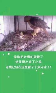 一世鹰名,毀於一蛋。???