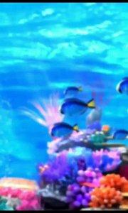 好美的海底世界