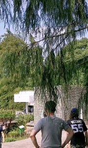 上海植物园#走出家门跳个舞