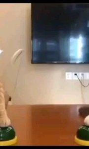我打,我打还不行嘛 @凉水泡面667#萌宠搞笑视频/开心一笑/宠物猫的日常/喵星#搞笑是刚需 #十一月打卡挑战 #又嗨又野在玩乐 #2020巅峰之战 @花椒热点